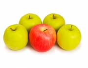 Stand out from crowd concept with apples isolated on white